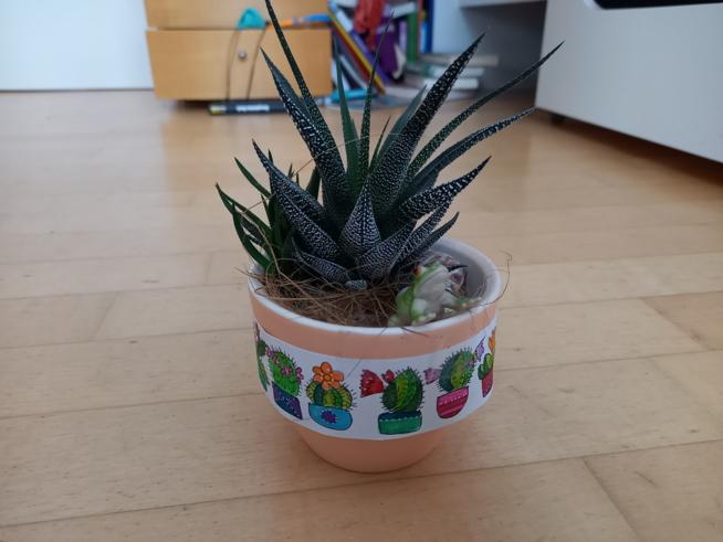 Ein Bild zum Beitrag Meine Pflanze
