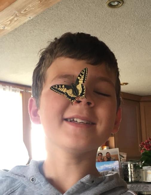 Ein Bild zum Beitrag Elias züchtet Schmetterlinge