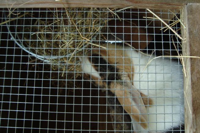Ein Bild zum Beitrag Giulia, mein Kaninchen