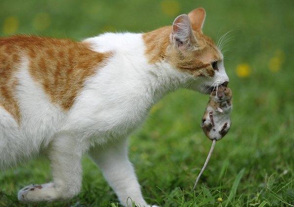 Ein Bild zum Beitrag Katzen