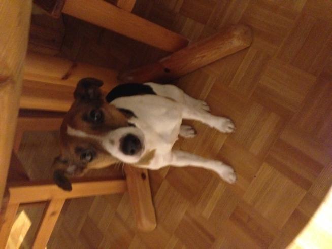 Ein Bild zum Beitrag Unser Hund