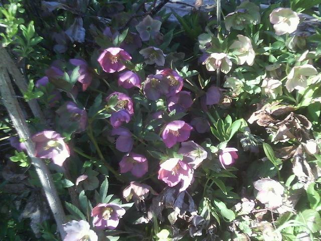 Ein Bild zum Beitrag Frühling