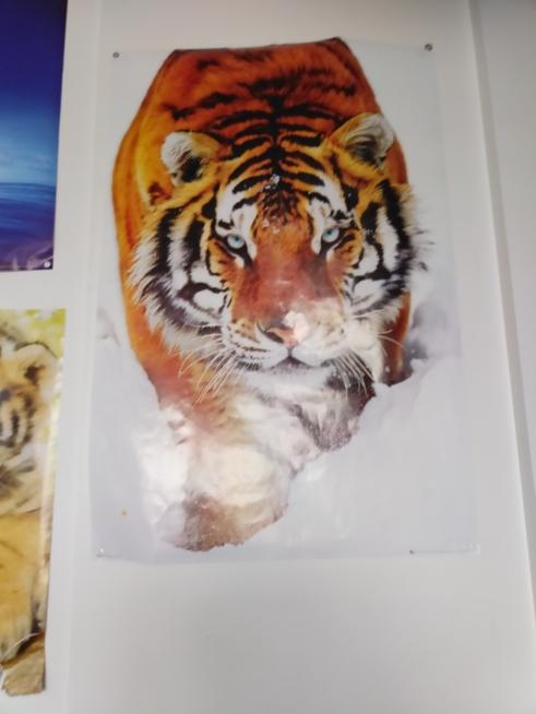 Ein Bild zum Beitrag Tierfoti Challenge
