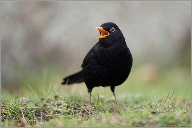 Ein Bild zum Beitrag Vogelnest