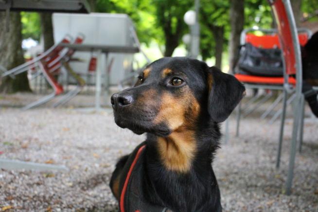 Ein Bild zum Beitrag Mi Hund und ich