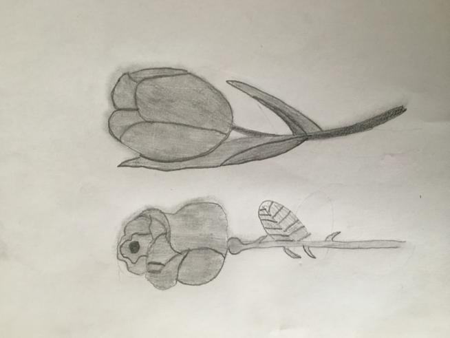 Ein Bild zum Beitrag Zeichnen ✍️