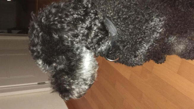 Ein Bild zum Beitrag Min Hund