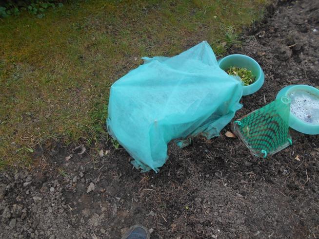 Ein Bild zum Beitrag Garten