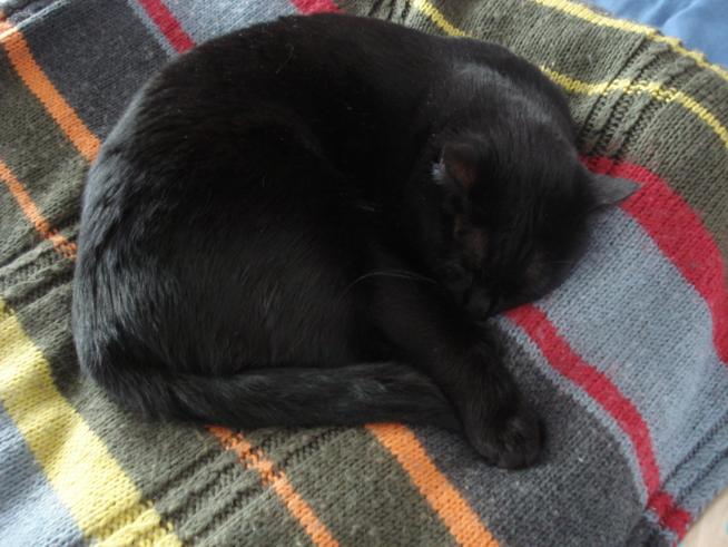 Ein Bild zum Beitrag Meine Katze, mein Begleiter