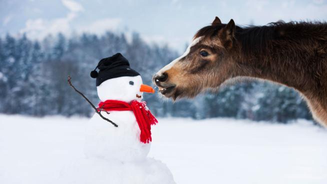 Ein Bild zum Beitrag Abstimmig Schnee Männer