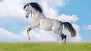 Ein Bild zum Beitrag Pferde Abstimmung