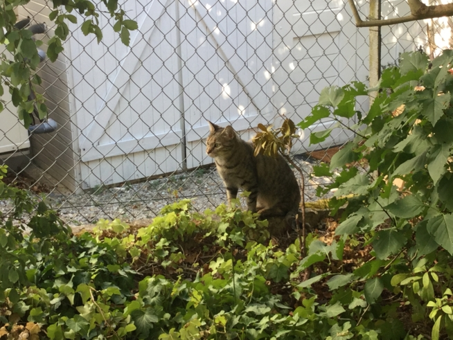 Ein Bild zum Beitrag Haustierchallenge von Lara21